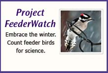 feederwatch